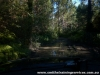 Beerburrum State-forest-2_tn